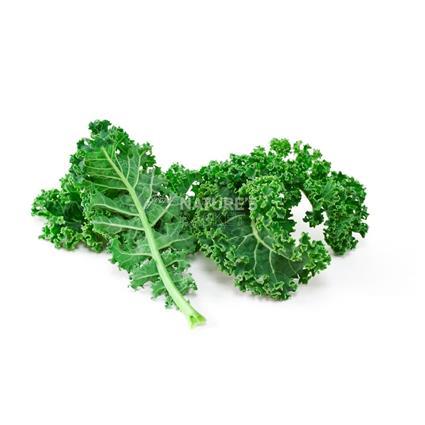 American Kale Flat  -  Exotic