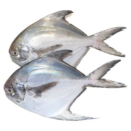 Fresh Regular Pomfret Whole - Get Natures Best