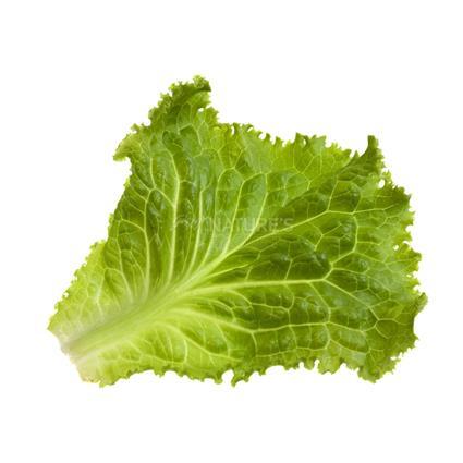 Lettuce Green Leaf - Exotic