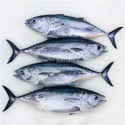 Tuna Whole - Cambay Fresh