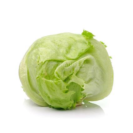 Lettuce Iceberg  -  Organic