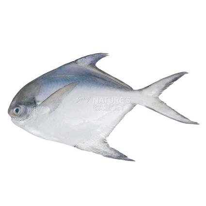Regular Pomfret Whole - Cambay Fresh
