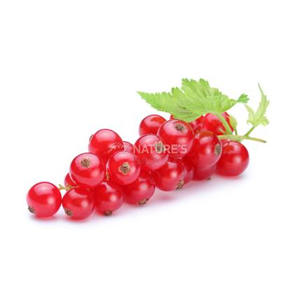 Red Currant  -  Exotic