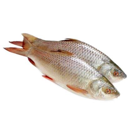 Rohu Steaks Fish -  Cambay Fresh