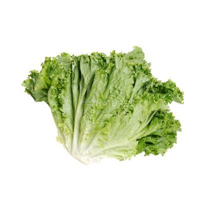 Lettuce Romaine Green  -  Exotic