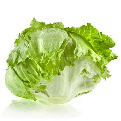 Lettuce Iceberg  -  Exotic