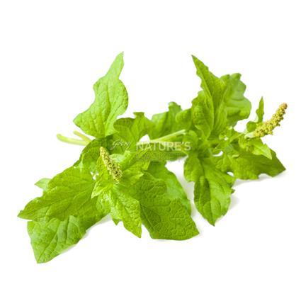 Bathua Leaf  -  Surti