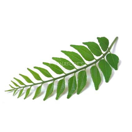 Curry Leaf - Natures Best