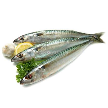 Mackerel - Whole - Fresh