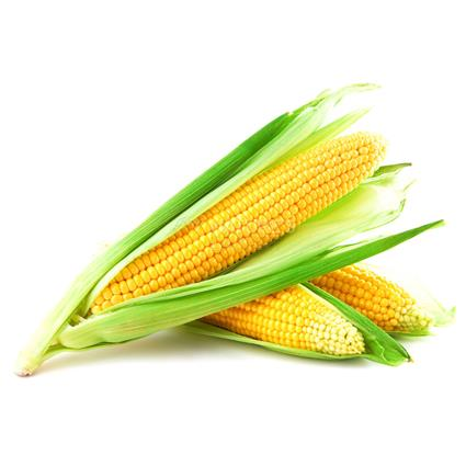 Sweet Corn  -  Exotic