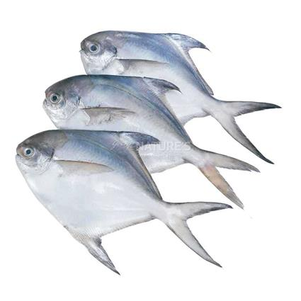 Medium Pomfret - Whole - Fresh