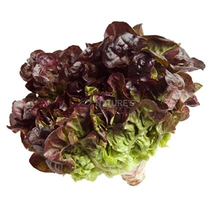 Ff Lettuce Red - Natures Basket