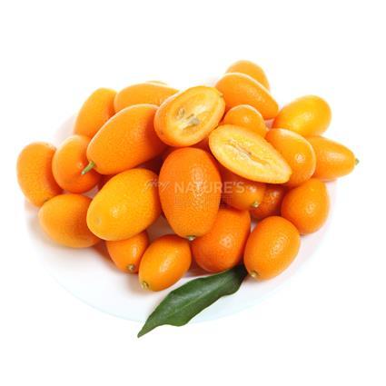 Kumquat - Exotic