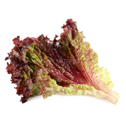 LETTUCE ROMAINE SALADABLE