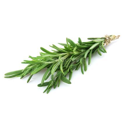 Rosemary  -  Exotic