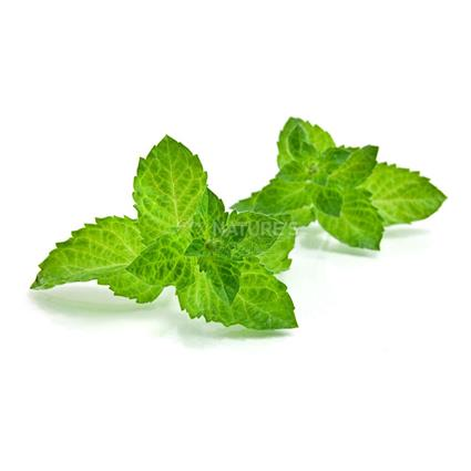 Mint/ Pudina - Surti/Tender Vegetable