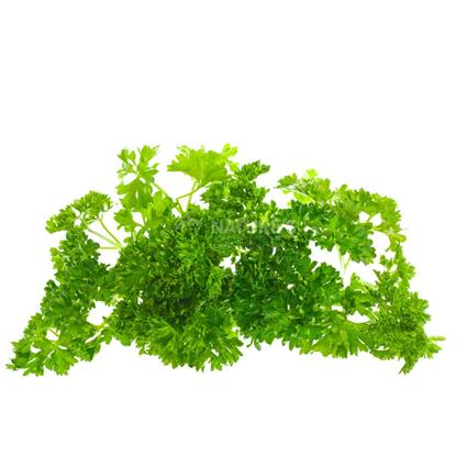 Parsley Cured - Exotic