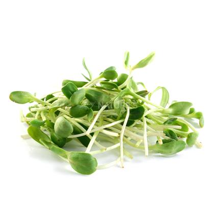 Sunflower Microgreens - Organic