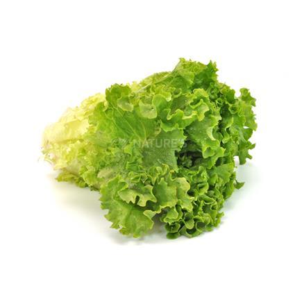 Lettuce  -  Organic