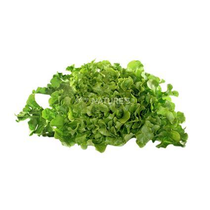 Lettuce Green Oak Leaf - Natures Best