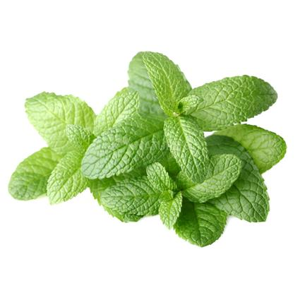 Mint - Natures Best