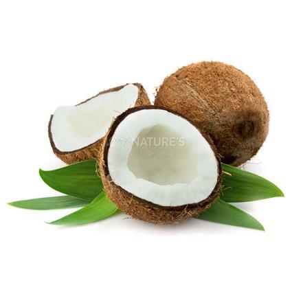 Coconut - Exotic