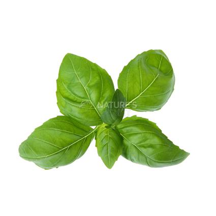 Basil  -  Organic