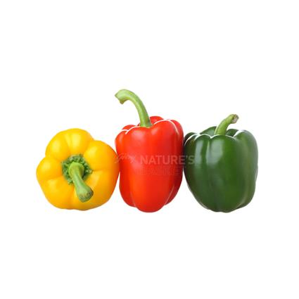 Capsicum Coloured - Exotic