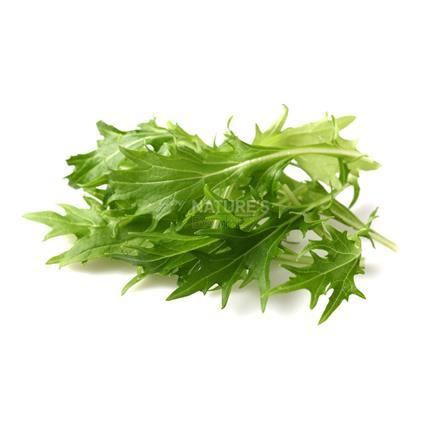 Lettuce Arugulla - Imported