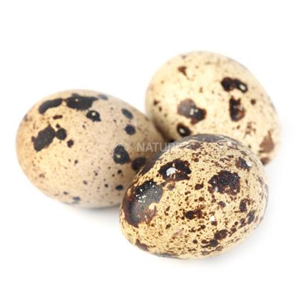 Quail & Duck Eggs - Buy Quail & Duck Eggs Online At Best