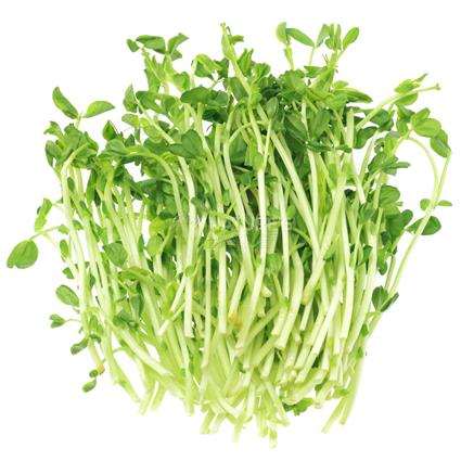 Sprouts Green Pea - Exotic