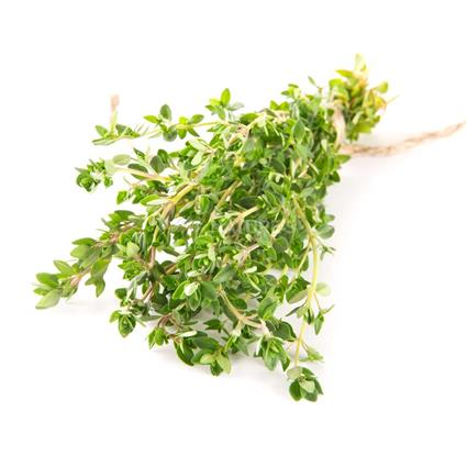 Thyme - Exotic
